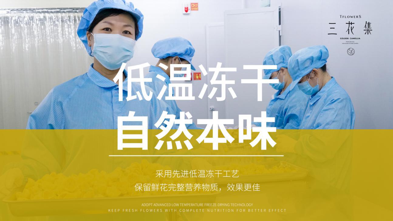 三花集金花茶:闽西山上飘雅香,一抹黄影润心田